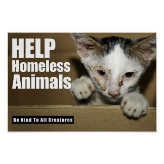 Poster animal sin hogar de la ayuda
