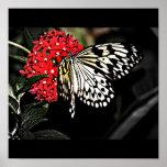 Poster-Animales/galería 10 de la Insecto-Mariposa