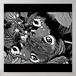 Poster-Animales/galería 13 de la Insecto-Mariposa