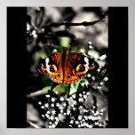 Poster-Animales/galería 17 de la Insecto-Mariposa