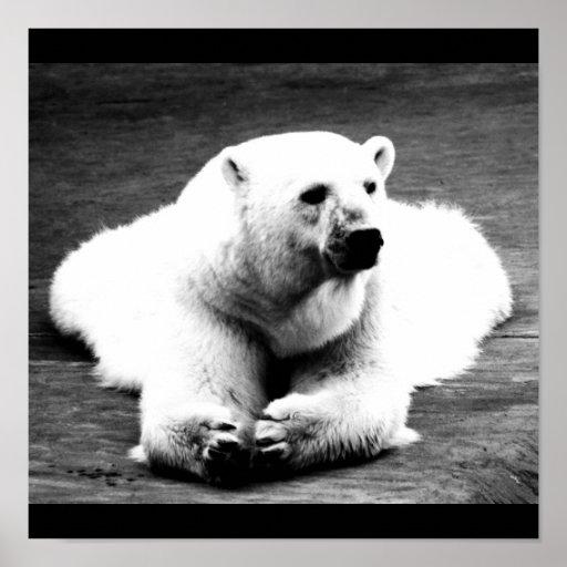 Poster-Animals-1