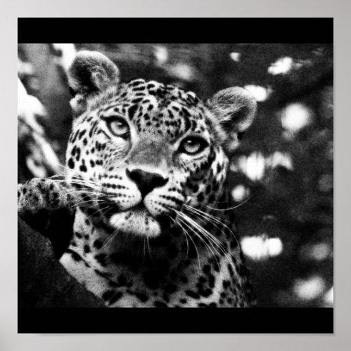 Poster-Animals-13