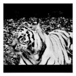 Poster-Animals-15