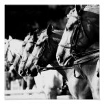 Poster-Animals-17