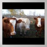 Poster-Animals-22