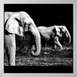 Poster-Animals-32