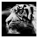 Poster-Animals-40