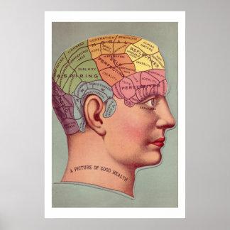Poster antiguo de la cabeza de la frenología