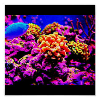 Poster-Aquatic Gallery 21 Poster