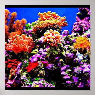 Poster-Aquatic Gallery 3