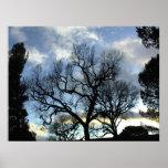 Poster: Árboles que alcanzan hacia cielo