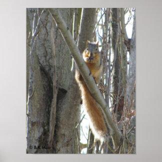 Poster - ardilla en árbol