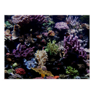 poster - arrecife de coral