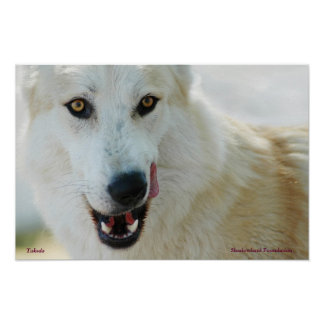Poster ártico del lobo