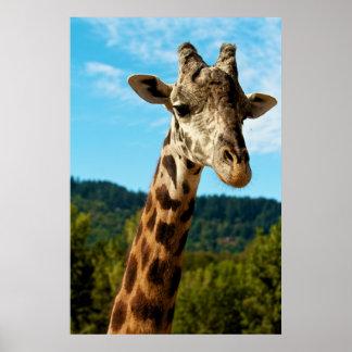 Poster ascendente cercano de la jirafa
