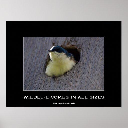 Poster aviar de la foto de la fauna del pájaro azu