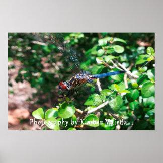 Poster azul de la libélula