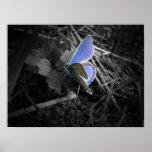 poster azul de la mariposa