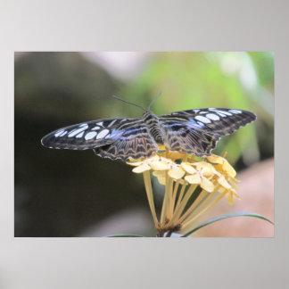 Poster azul de la mariposa de las podadoras