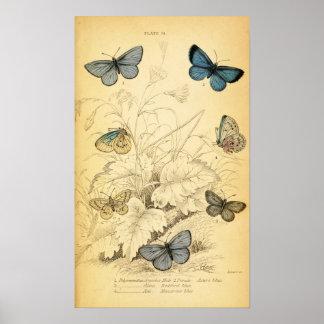 Poster azul de las mariposas del vintage