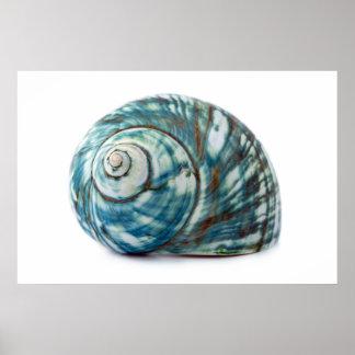 Poster azul de Shell del mar
