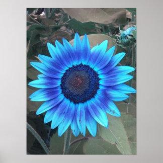 Poster azul del girasol