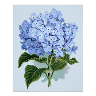 Poster azul del Hydrangea del vintage