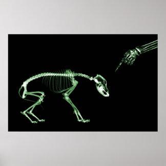 Poster- Bad Dog Xray Skeleton Black Green Poster