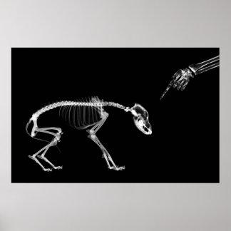 Poster- Bad Dog Xray Skeleton Black White Poster