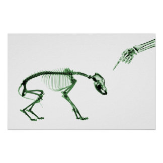 Poster- Bad Dog Xray Skeleton White Green Poster