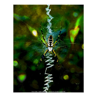 Poster Banana Spider - Coastal North Carolin...