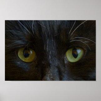 Poster: Black Cat Eyes Poster