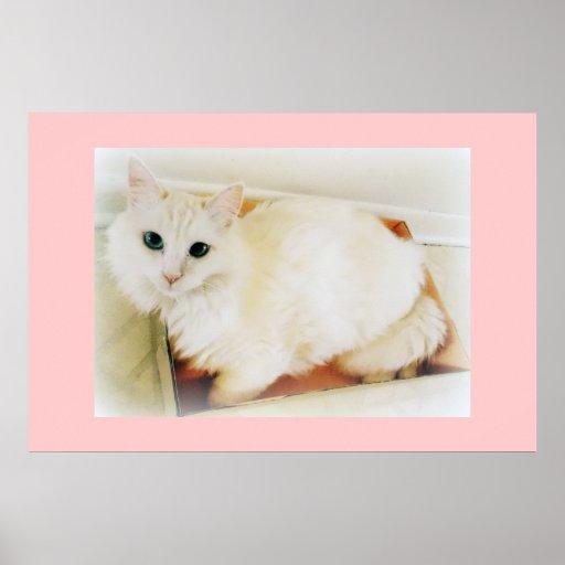 Poster blanco bonito del gato