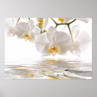 Poster blanco de las orquídeas póster