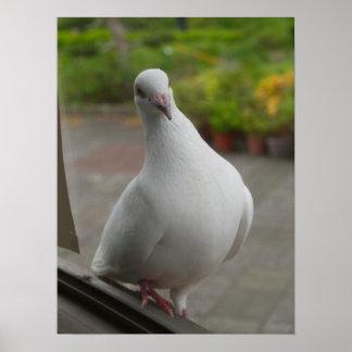 Poster blanco de las palomas