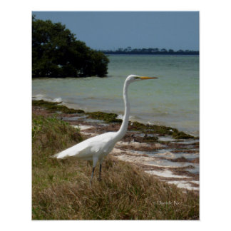 Poster blanco del Egret 2