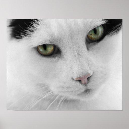 Poster blanco del gato