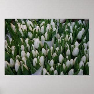 Poster blanco del manojo del tulipán