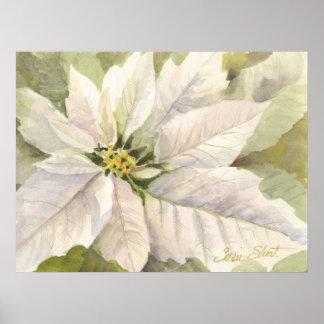 Poster blanco del Poinsettia