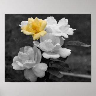 Poster blanco y negro de la flor del racimo del ro