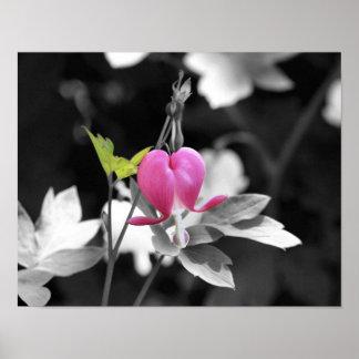 Poster blanco y negro de la flor rosada del corazó