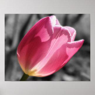 Poster blanco y negro de la flor rosada del tulipá