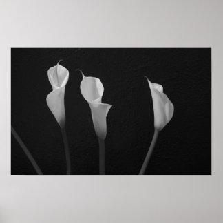Poster blanco y negro de las flores