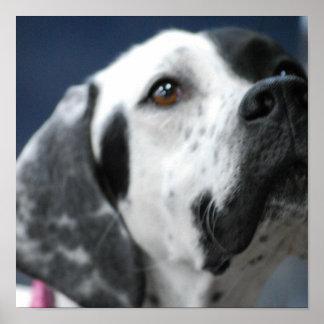 Poster blanco y negro del perro del indicador