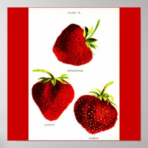 Poster-Botanicals-Fresas
