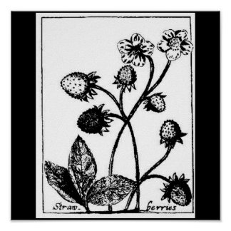 Poster-Botanicals-Fresas 3