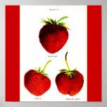 Poster-Botanicals-Fresas 5