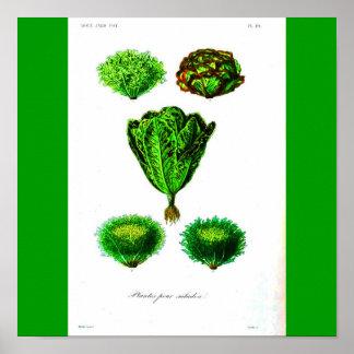 Poster-Botanicals-Lechugas Póster