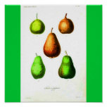 Poster-Botanicals-Pears