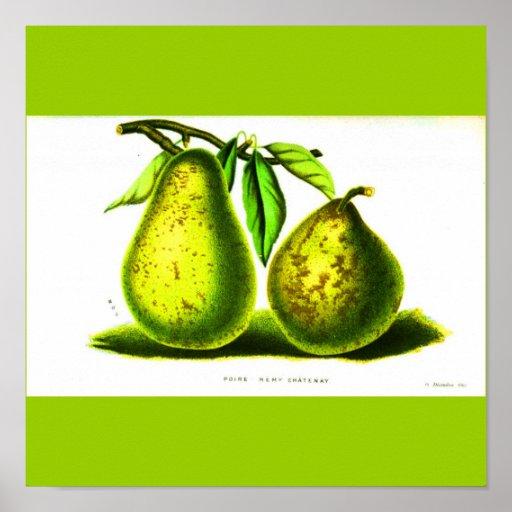 Poster-Botanicals-Peras Póster